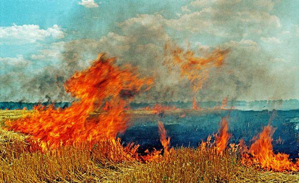 Солому сжигают прямо на полях