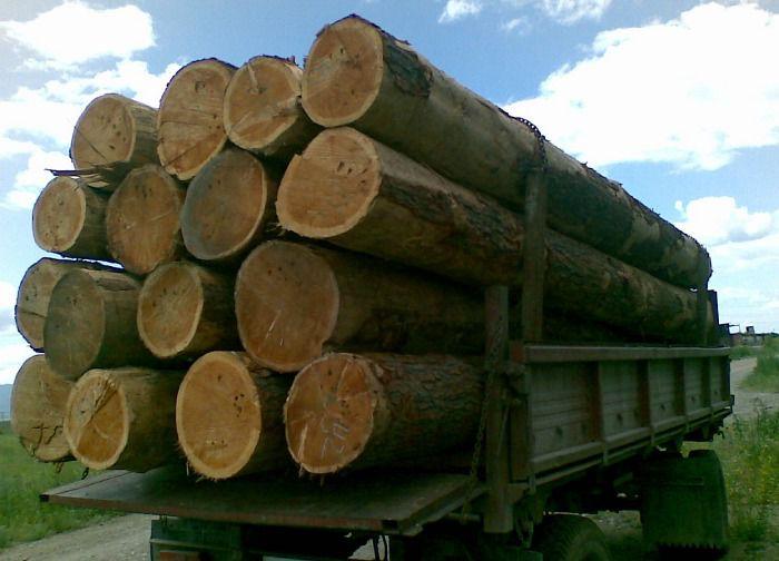 Готовимся к строительству: теперь у меня есть лес :)