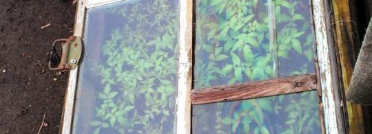 Вопрос дня: Когда высаживать овощи на грядки?