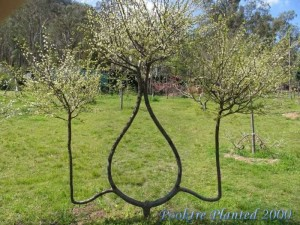 Дерево в форме зеркала