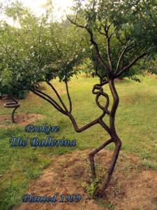 Дерево-человек