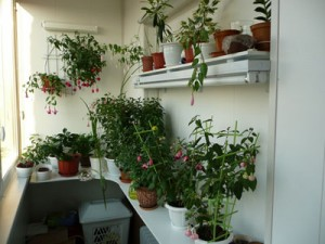 Еще один зимний сад на балконе
