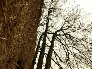 Деревья растут возле стены из соломы
