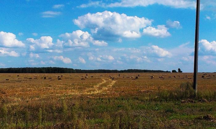 Соломенные тюки лежат в поле