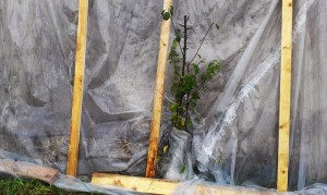 Дерево из палатки решил достать наружу перед ночными заморозками...