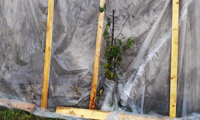 Дерево в палатке