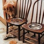 Вместо старых стульев - собачья кухня