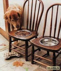 Вместо старых стульев - собачья кухня!
