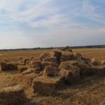 Солома на поле для строительства соломенного храма