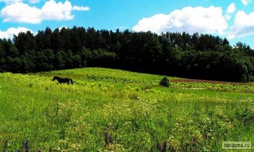 Лошадь пасется на поле