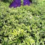 Сорняки растут