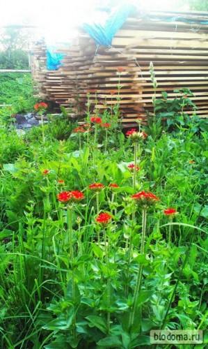 Эти красные цветочки на этом месте уже который год растут - надо будет как-то облагородить эту клумбу:)