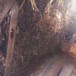 Подрезка соломы внутри дома снизу