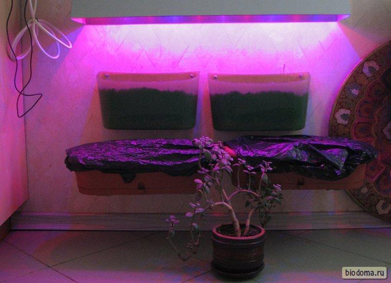 Лампа для растений на стенке