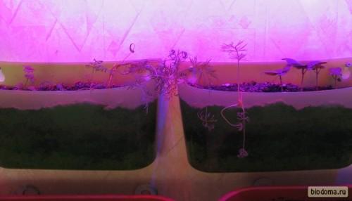 Лампа для растений, горшки с рассадой