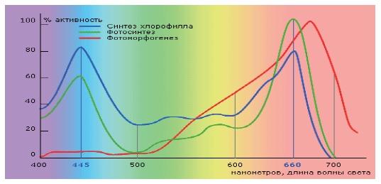 Пики активности основных циклов жизни растений