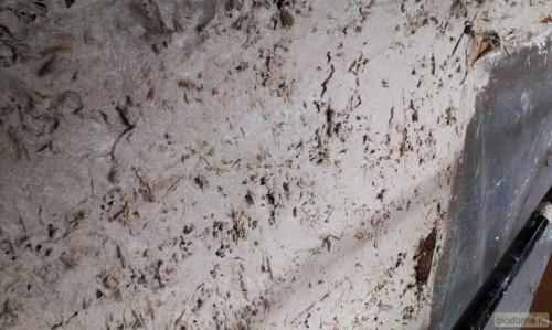 Первый слой известковой штукатурки на соломенной стене