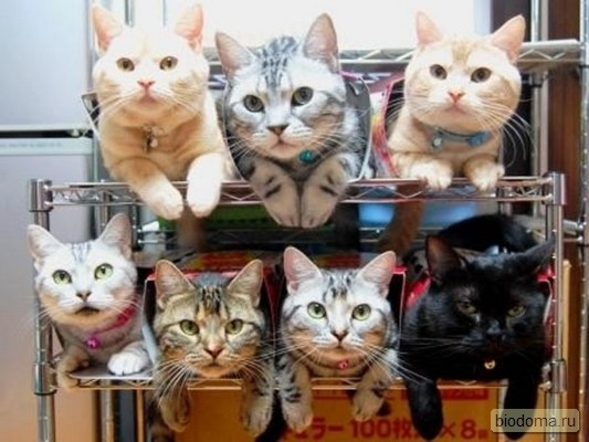 Котики сидят в старых ящичках